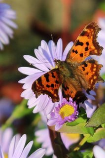 FOTKA - květena51
