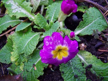FOTKA - na zahradě je to jako na jaře