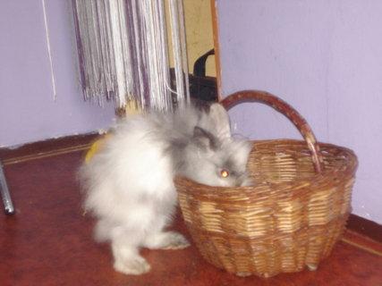 FOTKA - králíček