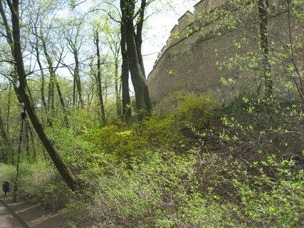 FOTKA - Na Petříně v dubnu 8