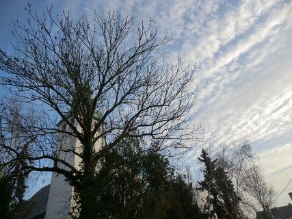 FOTKA - Strom u kostela