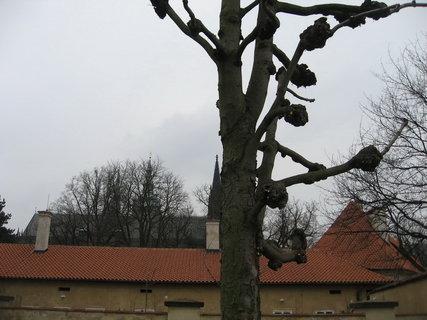 FOTKA - Královskou  zahradou 4