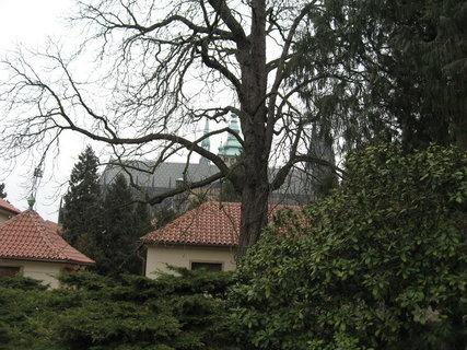FOTKA - Královskou  zahradou 8