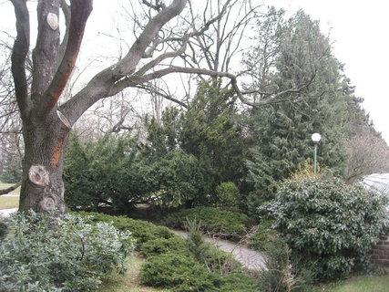 FOTKA - Královskou  zahradou 12