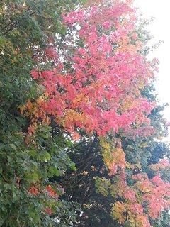 FOTKA - podzimní krajina2