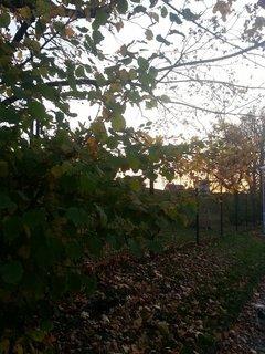 FOTKA - podzimní krajina3