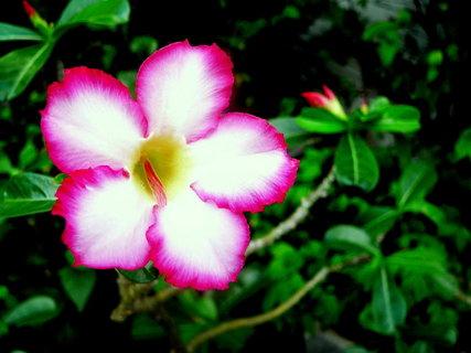 FOTKA - Střípky z Thajska (((((