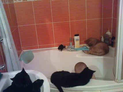 FOTKA - Kubík má u koupele společnost