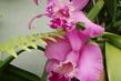 orchideje - takhle mi kvetou