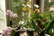 orchideje na verandě