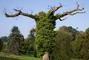 Roztahovačný strom