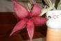 Pokojová květina