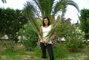 maminka u palmy
