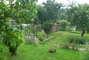zahrada 4