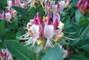 květy 2