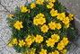 kytky u našeho vchodu
