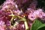 Beruška na květu