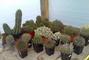 kaktusy 3