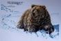 Vyšívaný obraz - Medvěd