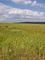 krajina na žďársku - zrající obilí