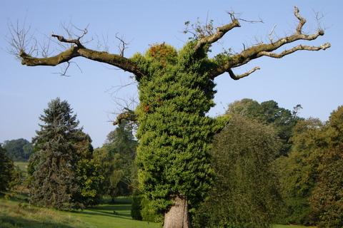 FOTKA - Roztahovačný strom