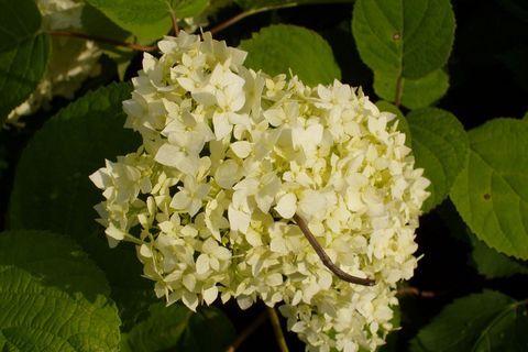 FOTKA - květ ...