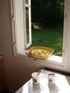 FOTKA - okno /zátiší/