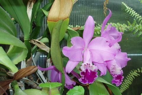 FOTKA - orchidej kvete