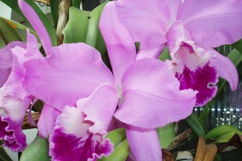 FOTKA - orchidea,