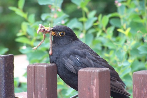 FOTKA - dobrou chuť ptáčku:-)