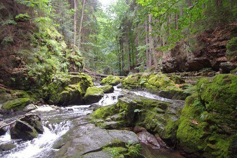 FOTKA - řeka Doubrava (1)
