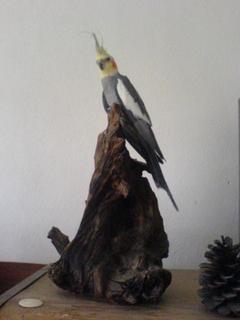 FOTKA - naše Vilíček