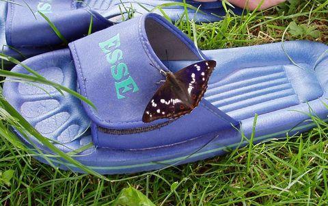 FOTKA - zfetovaný motýl