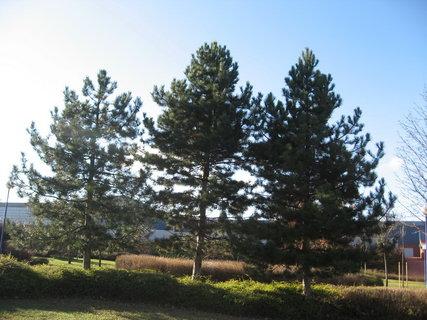 FOTKA - Prosinec, slunečno 5