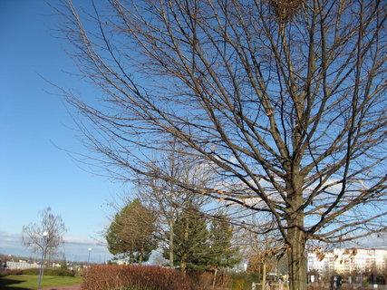 FOTKA - Prosinec, slunečno 12