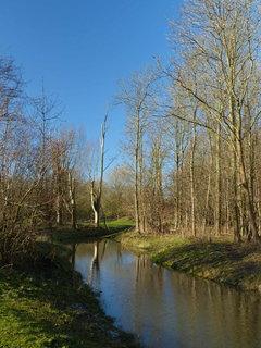 FOTKA - hole stromy