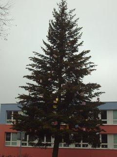 FOTKA - dárečkový strom před 4.ZŠ
