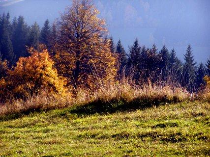 FOTKA - Podzimm