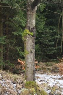 FOTKA - stromy v kožíšku