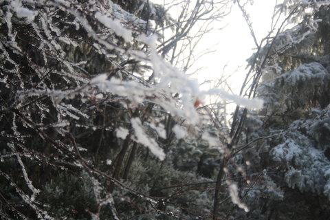 FOTKA - zima+vítr