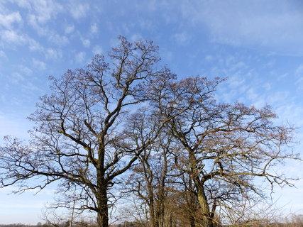 FOTKA - Stromy a nebe