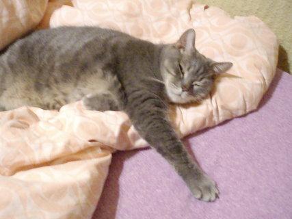 FOTKA - Kočička naše