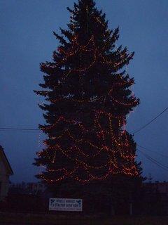 FOTKA - vánoční strom ve ZR 2