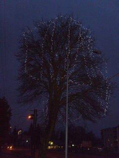 FOTKA - vánoční strom ve ZR 5