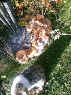 FOTKA - houby rostou i na zahradě