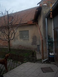 FOTKA - Benik a kočka