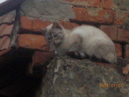 FOTKA - Benik a kočka1