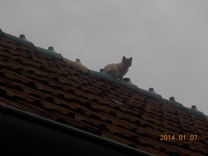 FOTKA - Benik a kočka3