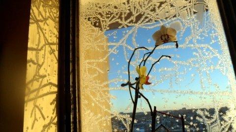 FOTKA - Mráz kreslí na okna