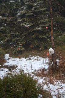 FOTKA - sever se sněhem